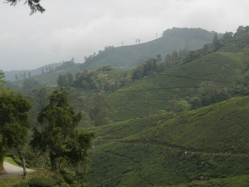 Cameron Highlands, trek, Boh Tea Plantation