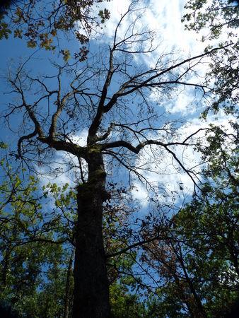 arbrezooplaisancetouch