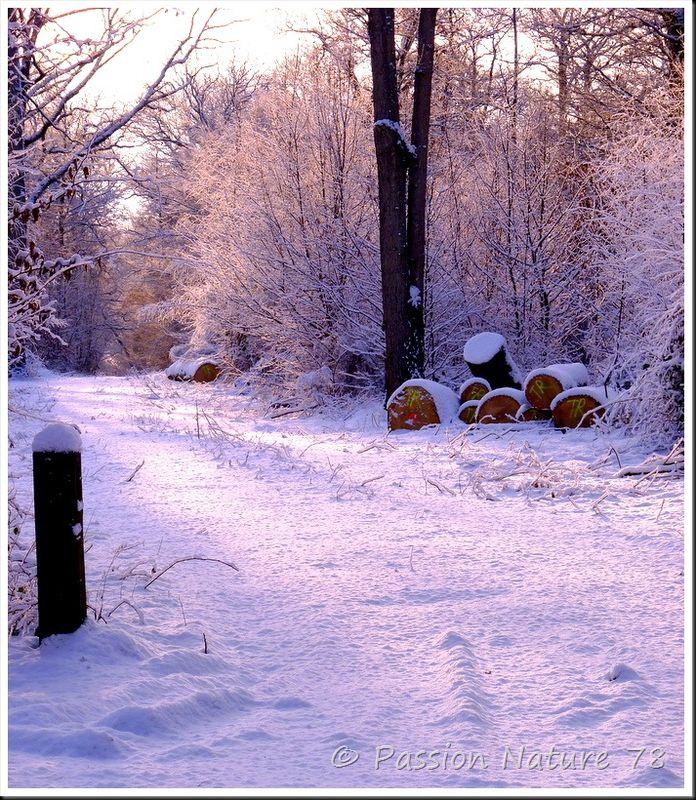 Cerfs et sangliers dans la neige