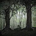 L'if, un arbre qui veille sur l'âme des défunts