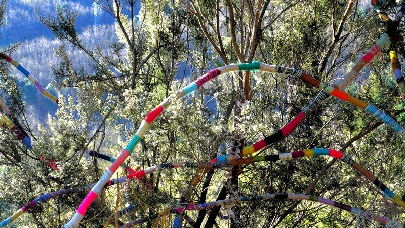 volière patchwork dans les bruyères arborescentes