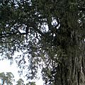DSCN1394-Temple du ciel