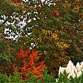 Linxe automne 2410158