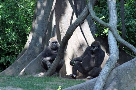 NYC_MMI___Bronx_Zoo_50