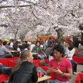 Picnic sous les sakura: hanami: activité traditionnelle au printemps