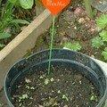 Idée pour égayer l'étiquetage des plantations - avril 2007