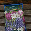 Fleurs de mars, bulbes and co - 2014