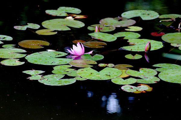 Fleurs du Botanique 041