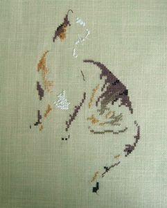 chatte tigrée suprise