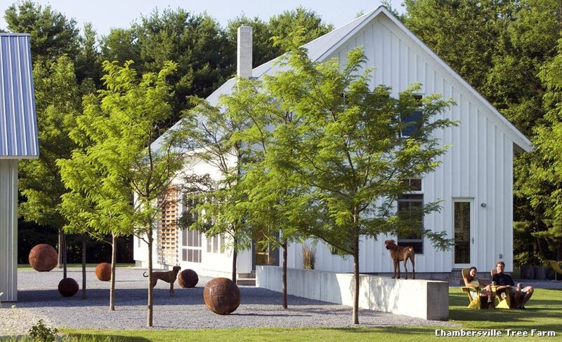 chambersville-tree-farm-landhausstil-garten-with-row-of-trees-by-wagner-hodgson-at-burlington