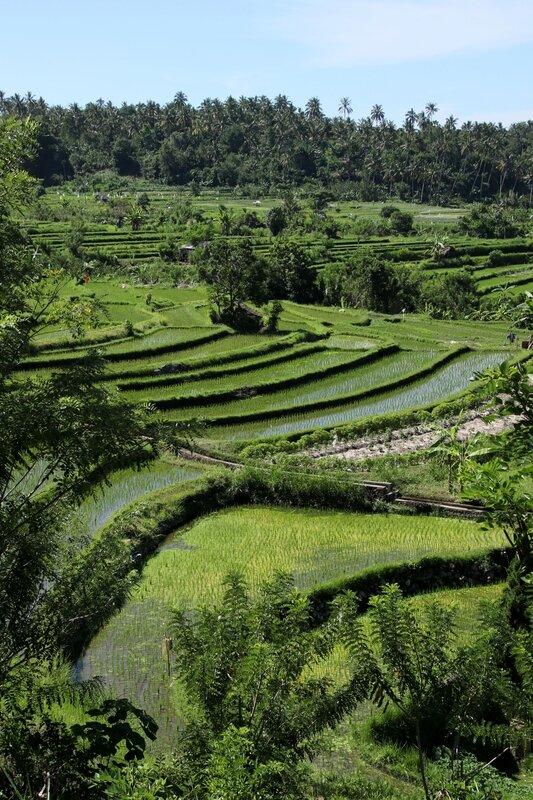 Bali 136