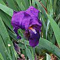 Iris 210316
