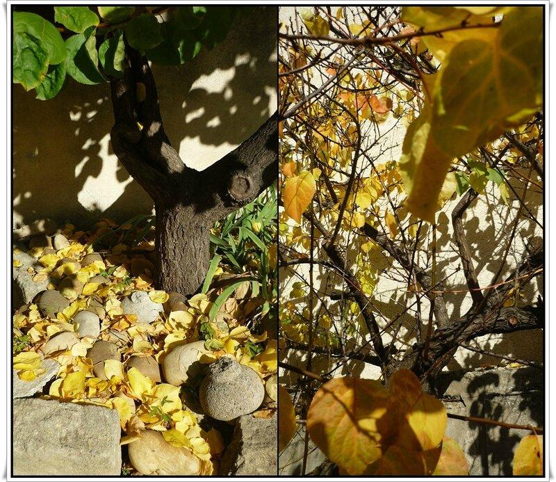 douce lumière d'automne