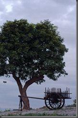 20111116_1715_Myanmar_8179