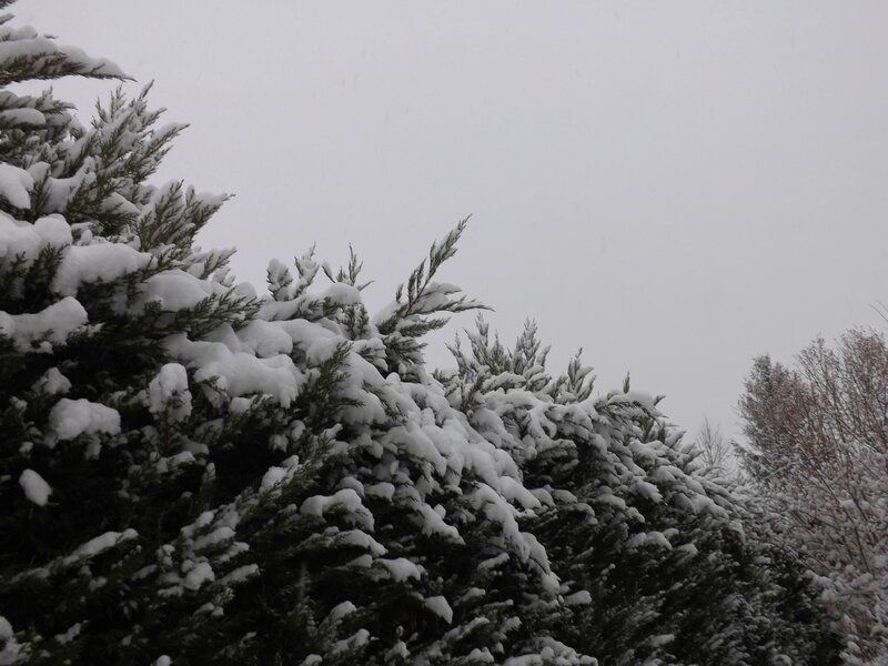 Neige 1er décembre 2017 (7)