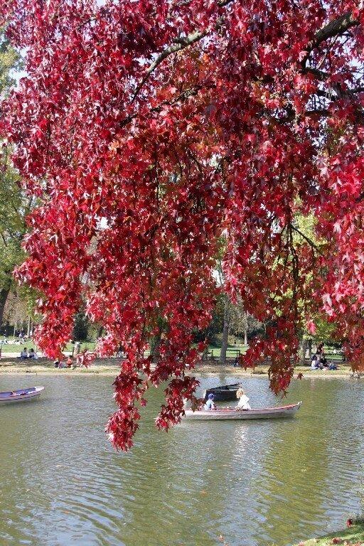 Bois de Vincennes 17_2591