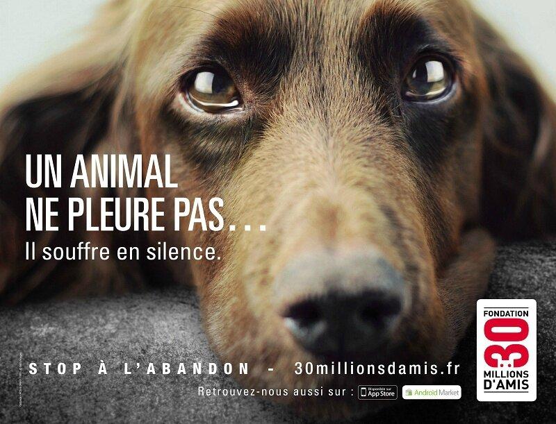 slogan animaux en voie de disparition