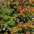 Feuillages automne 09101514
