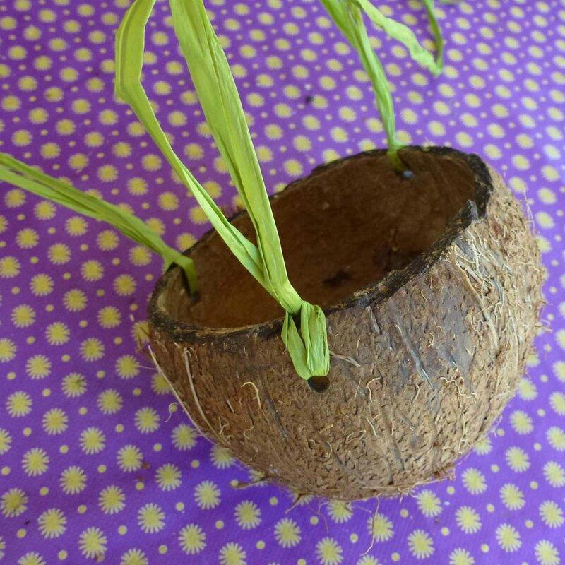 noix de coco 2