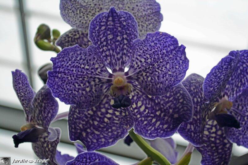Orchidée-256
