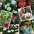 Au jardin de ninibidules...