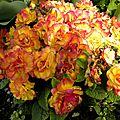 fleurs_avril-a (24)