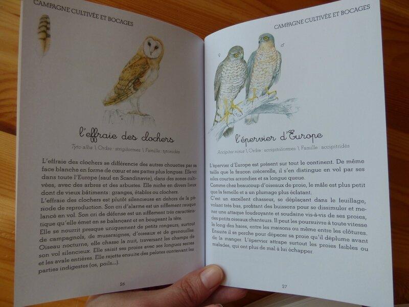 Coffret Montessori oiseaux (3)