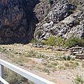 turquie : troupeau de chèvres et moutons