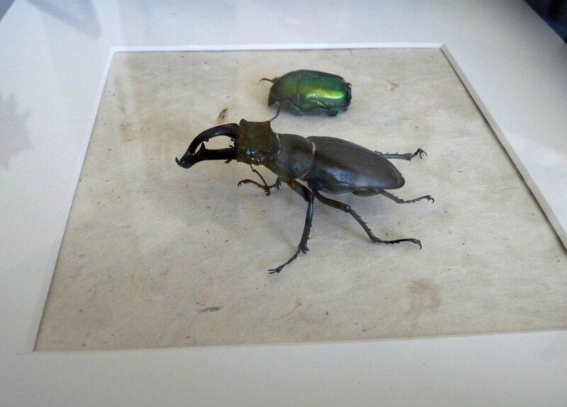 cadre insectes 05