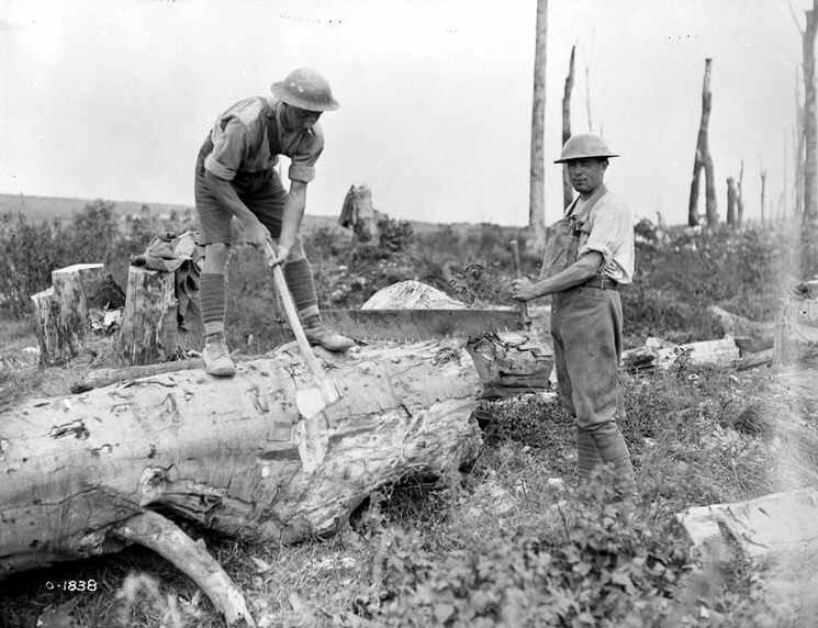 Vimy canadiens bois Aout 1917