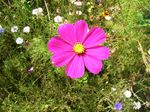 fleur_rose_vif_toulon