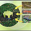 Vaso trap - piège escargots et limaces - trap trap