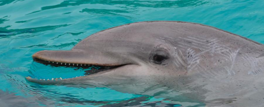 """Pour Galéo il y a urgence, la situation des dauphins à """"Planète Sauvage"""" est vraiment inacceptable"""