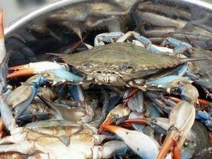 Crabe-edrooseo