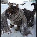 Humour - un chat frileux par temps de neige...