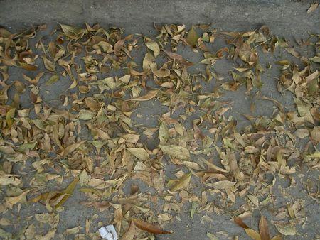 hojas_secas_dia_mudanza