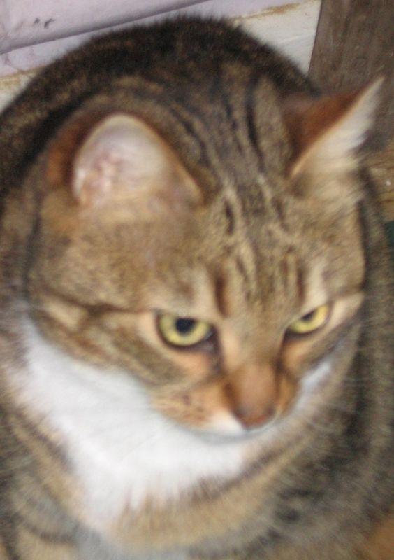 Portrait de Kaki