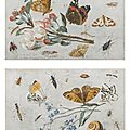 Jan van kessel, study of insects, butterflies and a snail with a sprig of forget-menots & study of butterflies and other insects