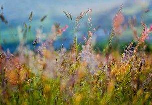 grass_flowers_paints_dim_variety_61603_preview