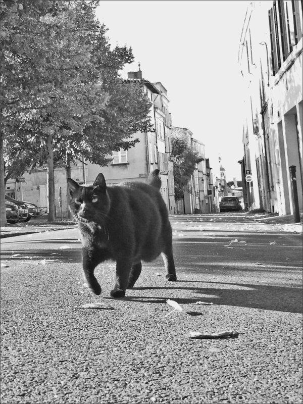 ville panthere noire 2 092015