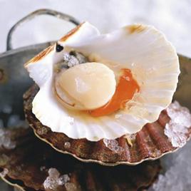 Noix de saint jacques cuites en coquilles mulsion de - Cuisiner des noix de st jacques avec corail ...