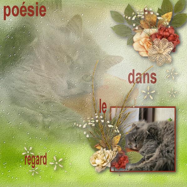 po_sie_dans_le_regard