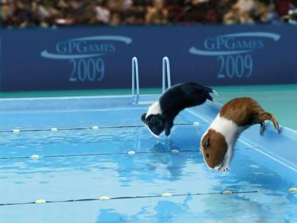 animal-natation