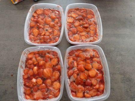 22-fraises à congeler (5)