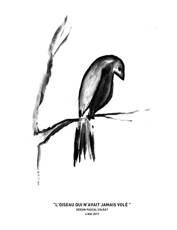 _l_oiseau_qui_n_avait_jamais_vole____