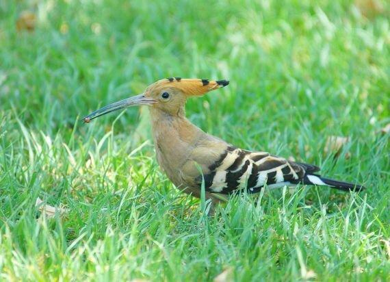 Les oiseaux au jardin le blog de val riane for Oiseaux de jardin au printemps