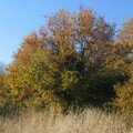 automne078