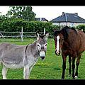 L'âne et la jument