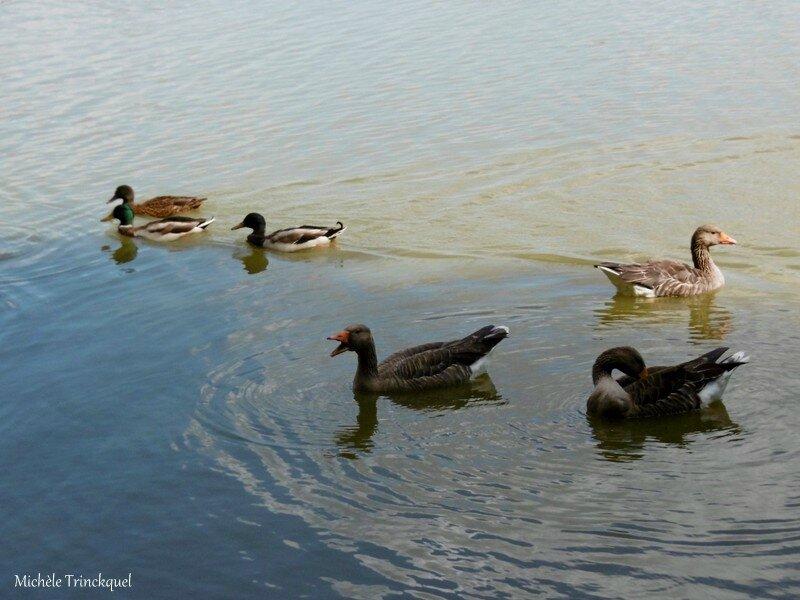 1-Lac de Tastoa et Eglise Magescq 060917