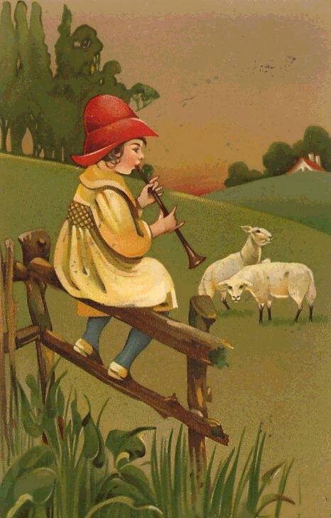 sheep66